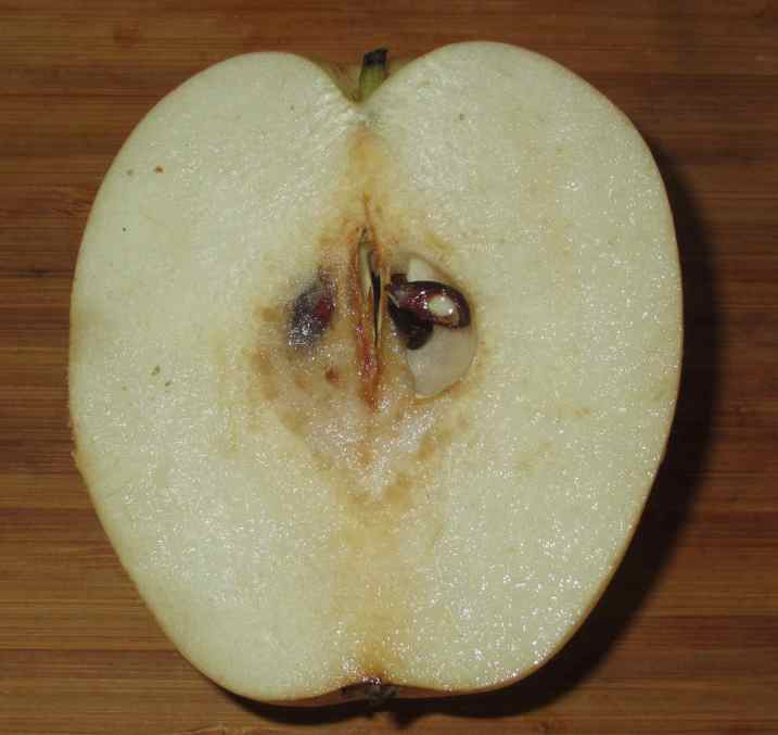 Asian Pear 2