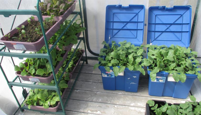 Deck Greenhouse Project Update 01