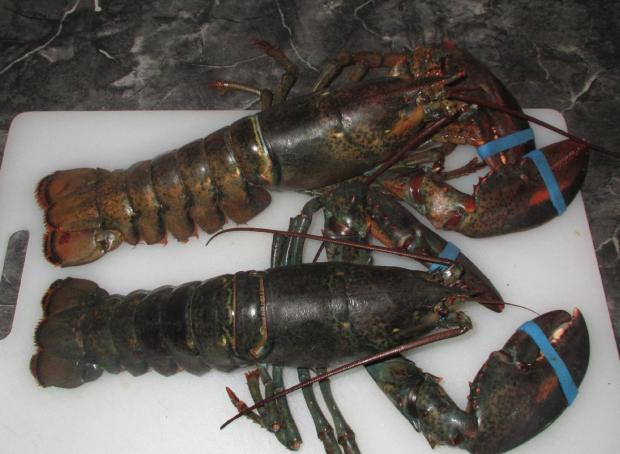Boiling Lobsters 1