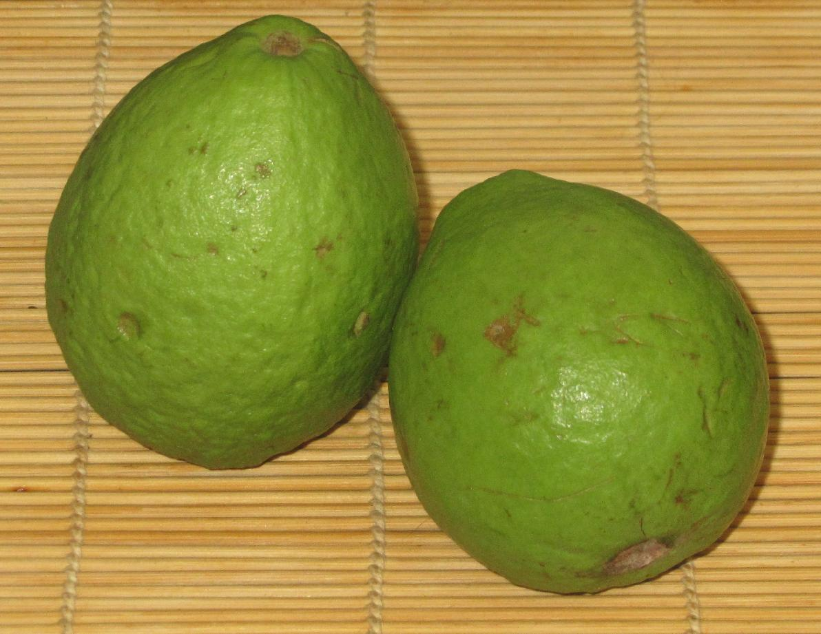 Foodstuff: Guava – Sybaritica