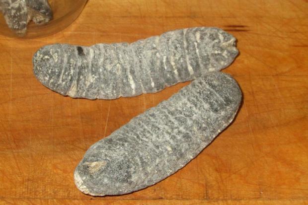 Research paper on sea cucumber