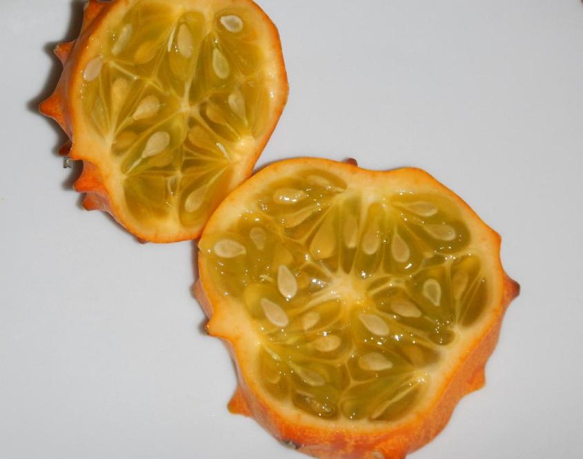 Spiny Melon 2